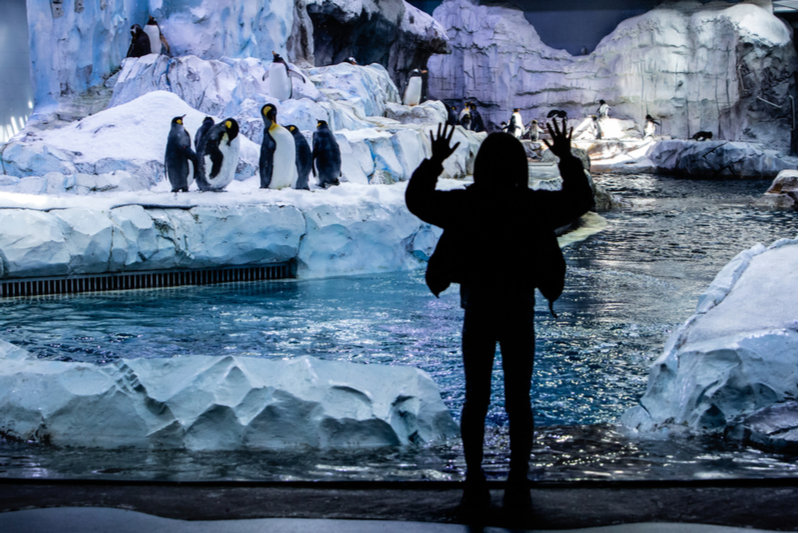 The Detroit zoo is embracing a renewable energy plan.