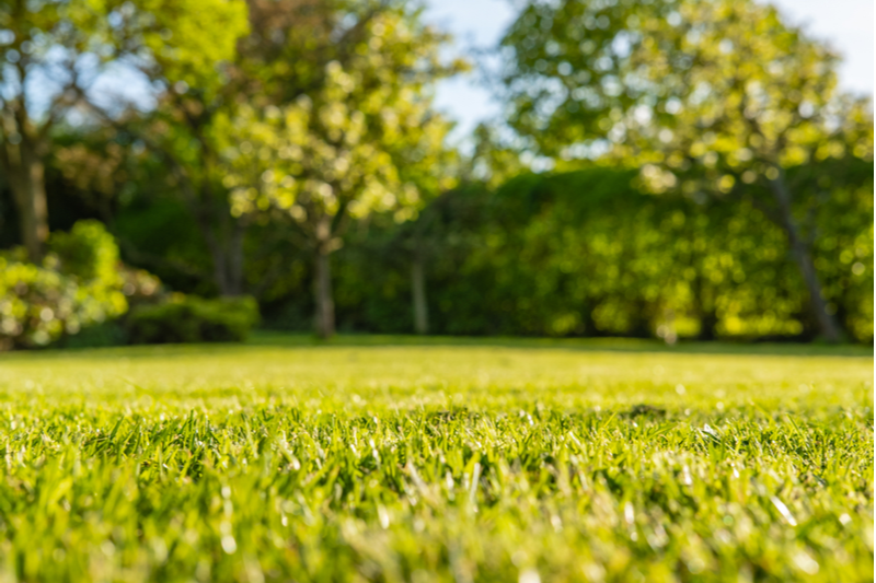 Your home's landscape can have an impact on your monthly water bill.