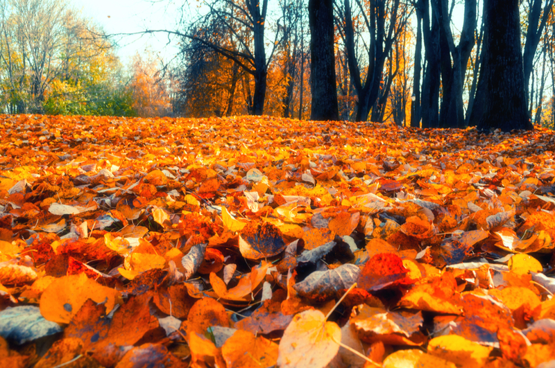 Cooler fall temperatures mean routine maintenance for homeowners.