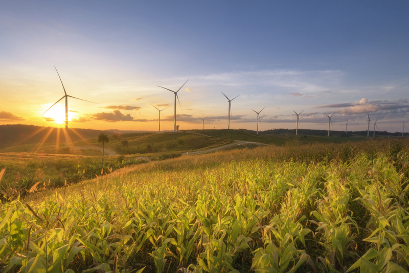 Wind farms are becoming increasingly popular in Texas.