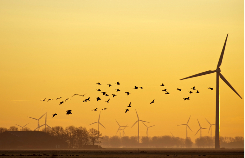 Wind turbines may provide clean energy, but how do they impact bird populations?